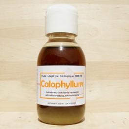 CALOPHYLLUM